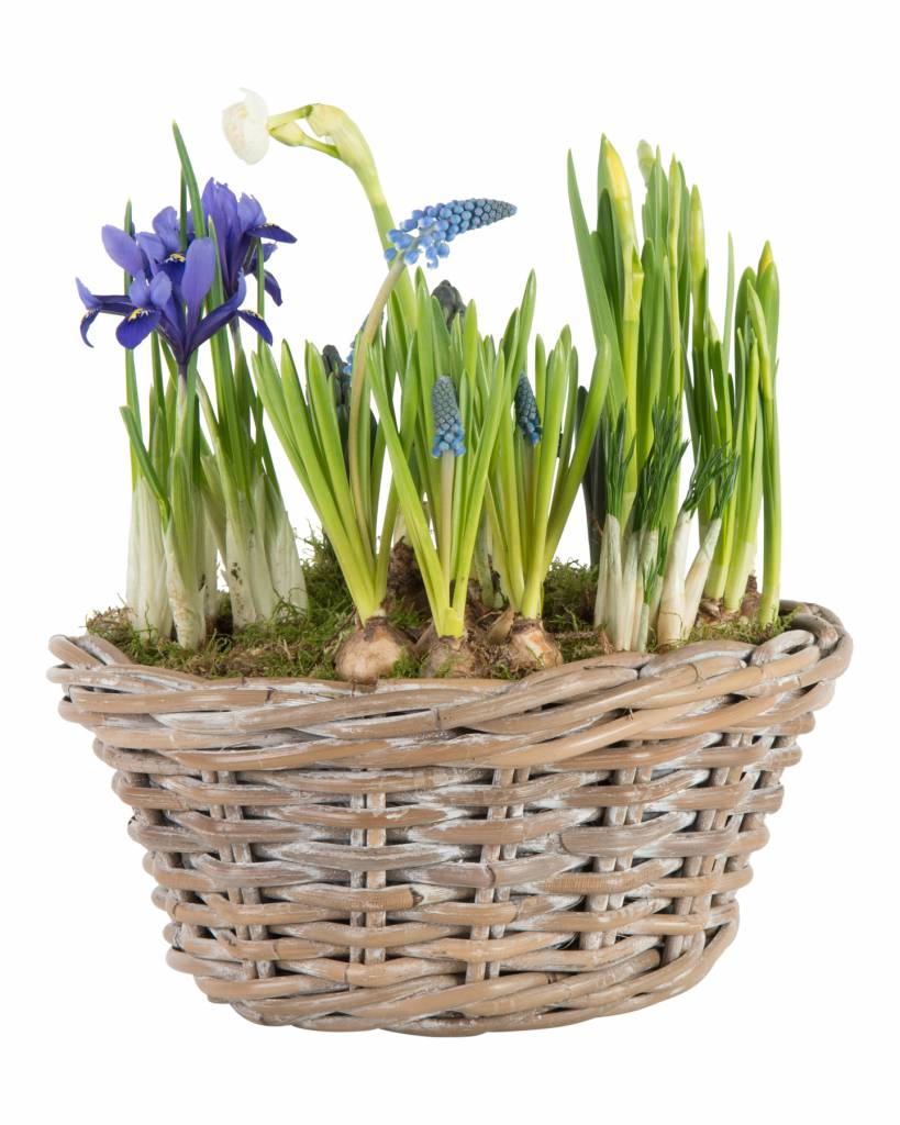 Vrolijk voorjaarsmandje