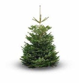 kerstboom bezorgen