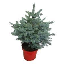kleine kerstboom bezorgen
