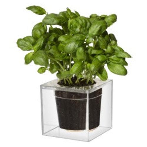Boskke Cube, small, doorzichtig