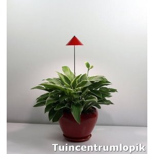 Parus iSun PotLed (ROOD) 7W  met controller