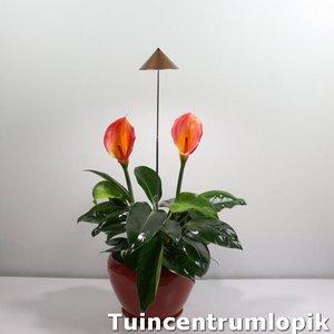 Parus iSun PotLed (KOPER) 10 watt