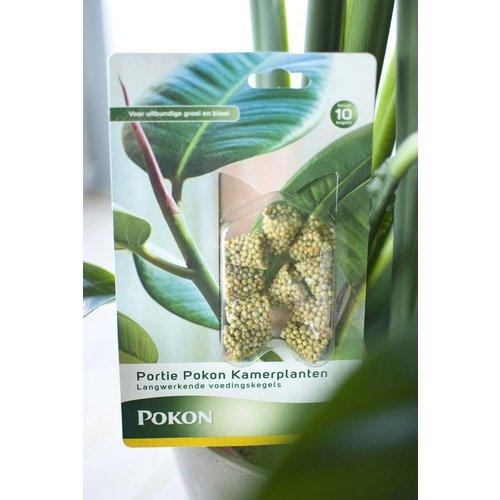 Pokon Kamerplanten Voedingskegels 10 stuks