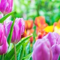 Tuin kalender April