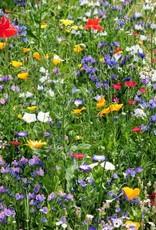Ireland Beeswax Wraps Irish Wildflower Seedbomb