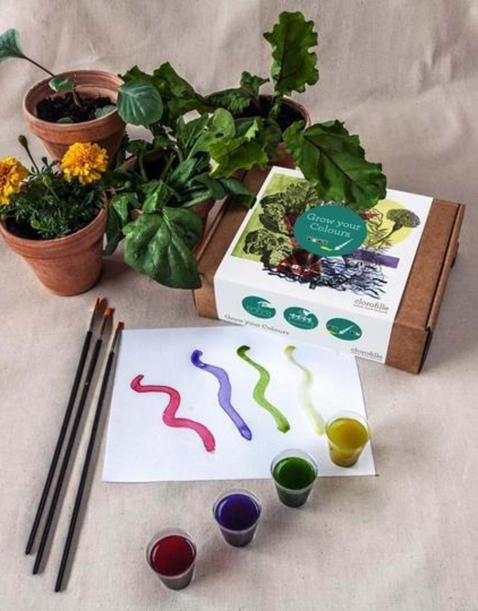 Jiminy Eco Toys Grow your own paints