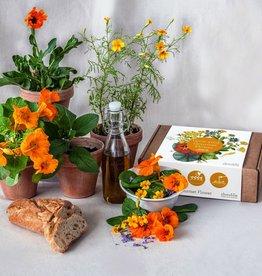 Jiminy Eco Toys Grow your own gourmet flower