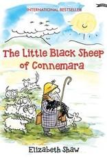 Little black sheep of Connemara