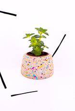 Hey Bulldog! Design Sprinkles - Concrete Planter (Small)