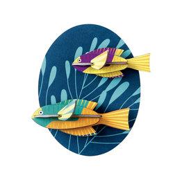 Studioroof Spanish Hogfishes