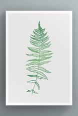 Petal to Petal Marsh Fern - Greeting Card