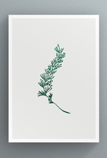 Petal to Petal Tunbridge Filmy-Fern - Greeting Card
