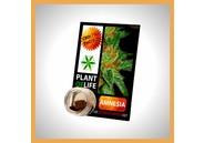 Plant of Life CBD Solid Amnesia 3,8%