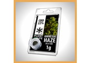 CBD Solid Amnesia Haze 20%