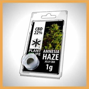 Plant of Life CBD Solid Amnesia Haze 20%