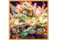 CBD Flower Orange Bud 3g