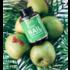 Beauty Bear Nagel Vitamine 150gr