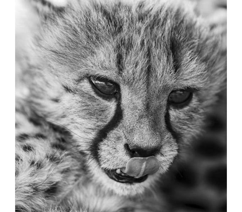 Kleine Cheetah