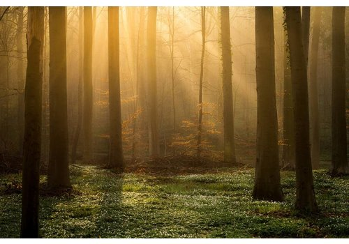 Vincent Fennis Enchanted Forest