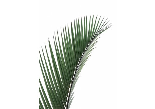 cre8design Palm leave 50x70