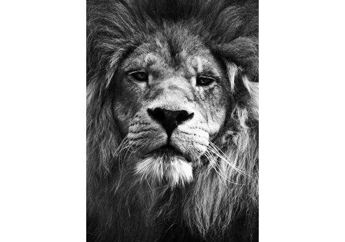 cre8design Lion 50x70