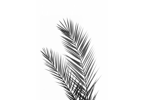 cre8design Black palm 50x70