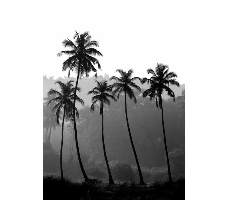 Palm Trees 50x70