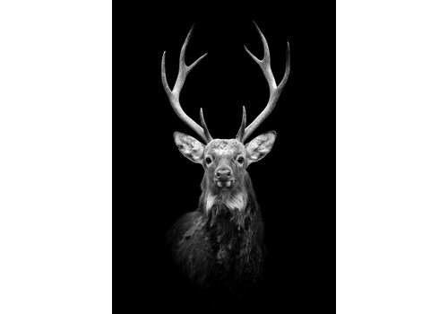 cre8design Black Deer 50x70