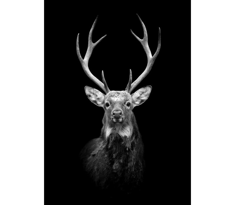 Black Deer 50x70