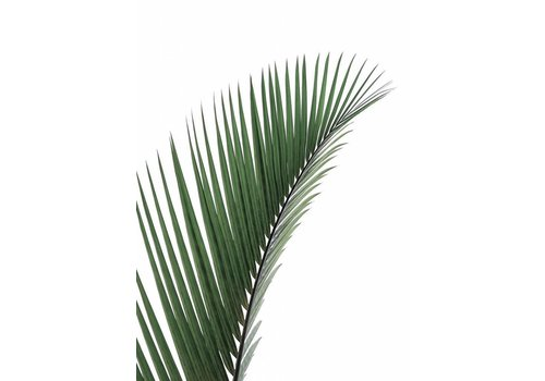 cre8design Palm Leave 30x40