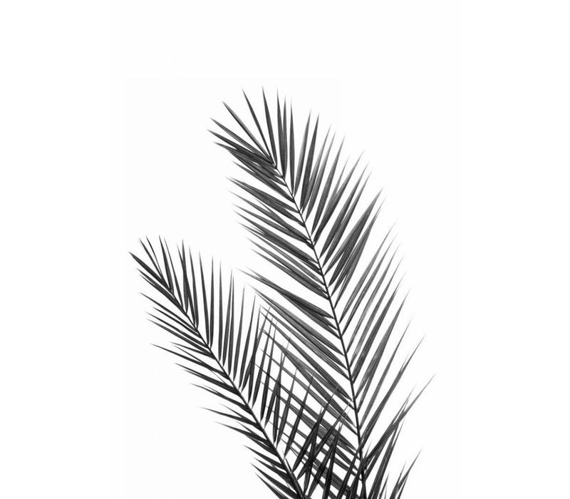 Black palm 30x40