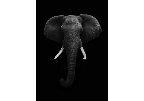 cre8design Black elephant 30x40