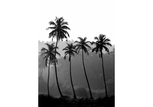 cre8design Palm Trees 30x40