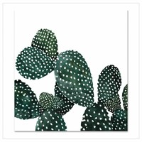 Artprint 30x30 - Cactus Family