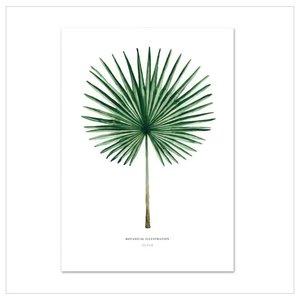 Leo La Douce Artprint A4 - Fan Palm