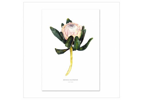 Leo La Douce Artprint A4 - Red King Protea