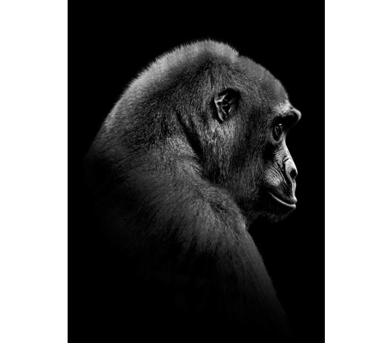 Gorilla 30x40