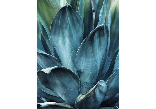 cre8design Cactus 50x70