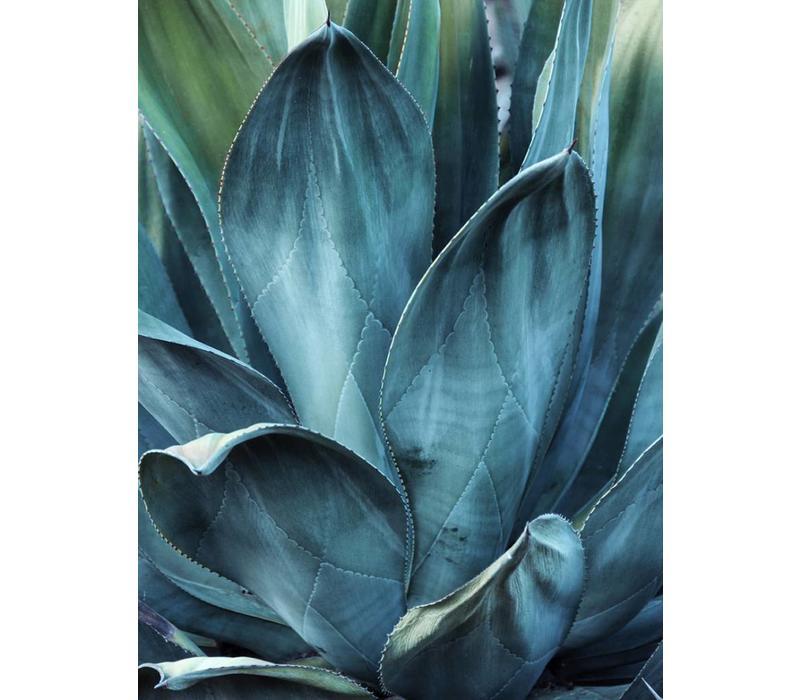 Cactus 50x70