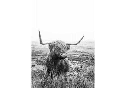 cre8design Schotse hooglander