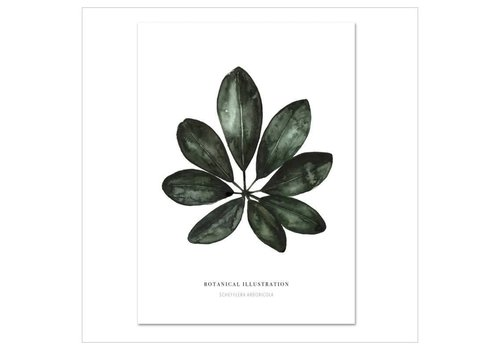 Leo La Douce Artprint A4 - Schefflera arboricola