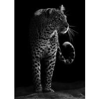 Luipaard 50x70cm