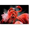 Flamingo's 50x70
