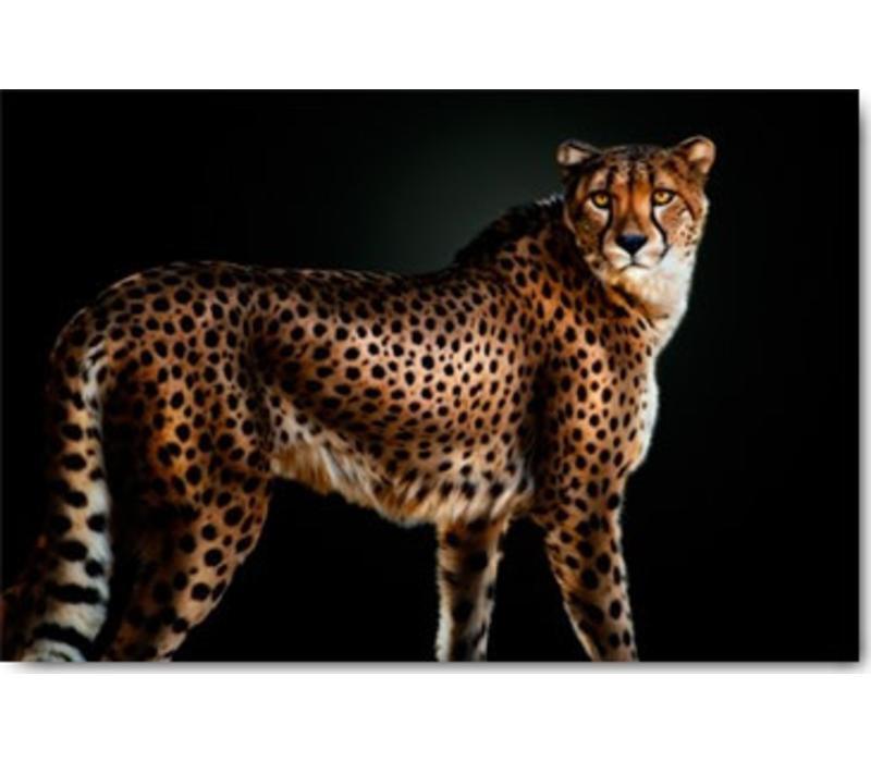 Cheetah 50x70