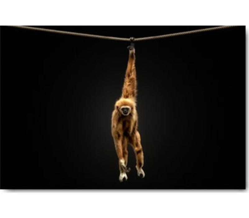 Hangende aap 50x70