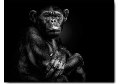 Chimpansee 50x70