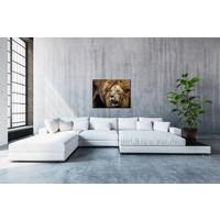 Leeuw kleur 50x70