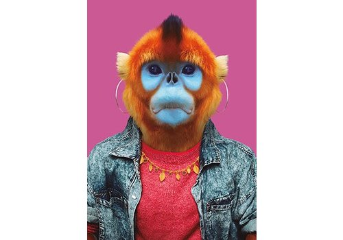 Klang und Kleid Golden Snub-nosed Monkey