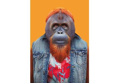 Klang und Kleid Bornean Orangutan