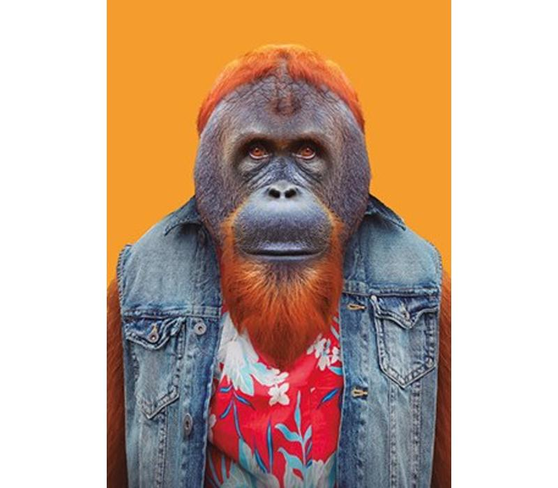Oerangutan uit Borneo